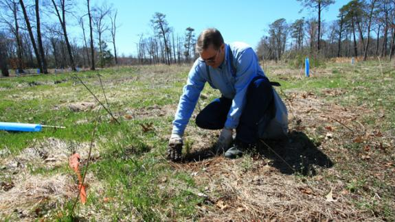 Image of A volunteer helps plant a tree seedling on an old fairway inside Cape Island WMA in 2010.