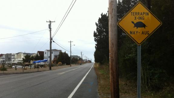 "Image of A new ""Terrapin X-ING"" that was installed on Radio Rd. on Osborne Island in Little Egg Harbor, NJ by Ocean County Roads Department."
