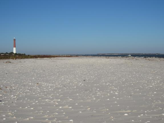 Image of Highly suitable piping plover nesting habitat created by the storm along the south side of Barnegat Inlet.