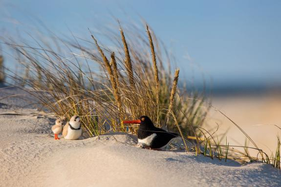 Image of Plush Piping Plover meets a plush Oystercatcher, on the beach.