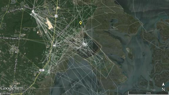 Image of A spiderweb of movements by Nacote around Forsythe NWR. View large.