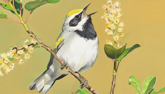 Image of Golden-winged warbler painting from Conserve Wildlife Foundation's Rare Wildlife Revealed exhibition by James Fiorentino.