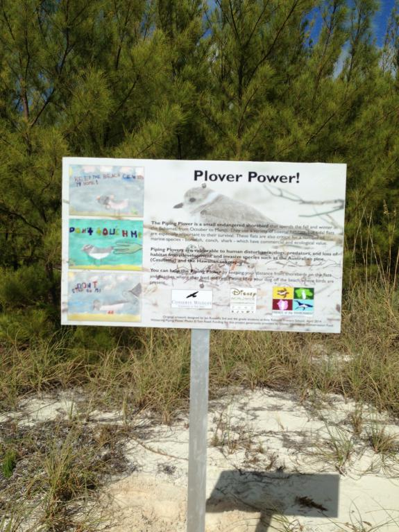 Image of Plover Power! Wintering Piping Plover Interpretive Sign installed at Gillam Flats, Green Turtle Cay, Abaco, The Bahamas. The interpretive sign was designed using original artwork by Jan Russell's 3rd and 4th grade students at Amy Roberts Primary School, Green Turtle Cay as part of the Shorebird Sister School Network program conducted by Conserve Wildlife Foundation of New Jersey and Friends of the Environment.
