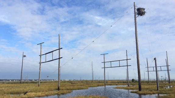 Image of Old telephones that remain from an old trans-Atlantic communication array were home to ospreys. This year the poles were removed by USFWS and we installed new osprey nest platforms on some poles that were cut and left.