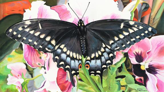 Image of The Black swallowtail butterfly is the official butterfly of the state of New Jersey.