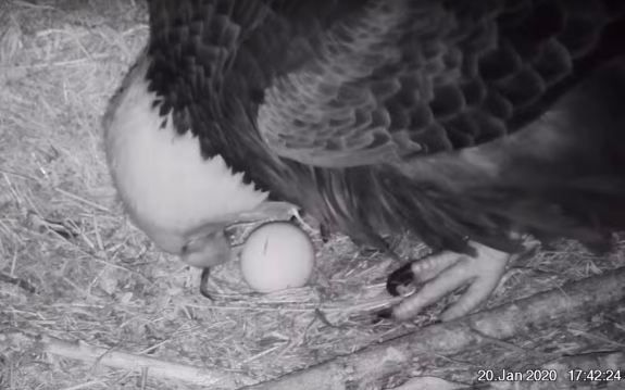 Image of First Glimpse of egg 5:42pm