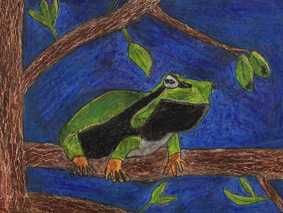 Image of Species on the Edge Art and Essay Contest winner. Pine Barrens treefrog.