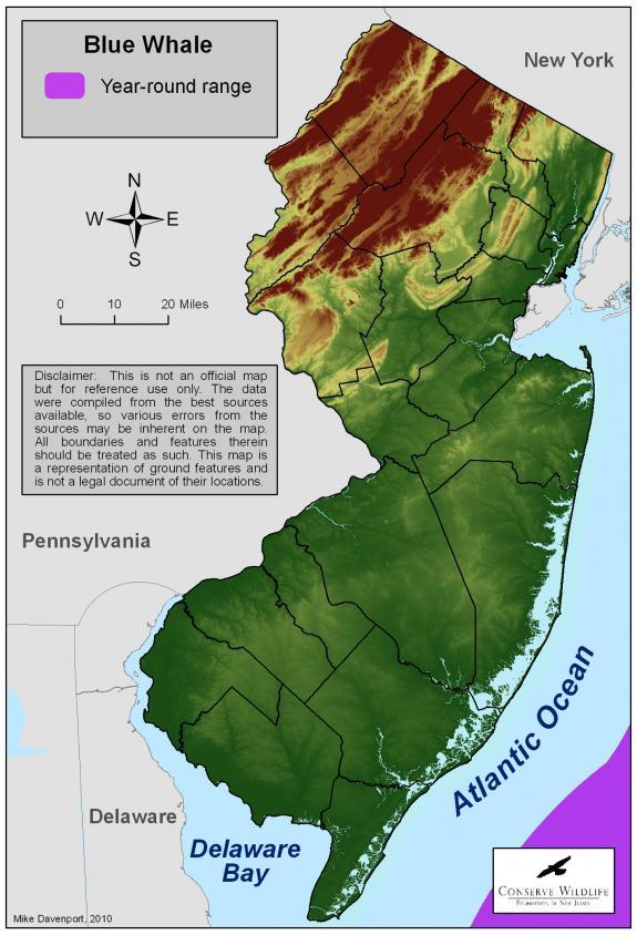 Blue whale habitat map - photo#25