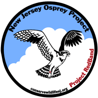 Image of Osprey - red band logo