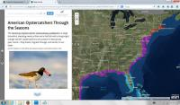 Image of American Oystercatcher Story Map Home Page