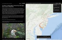 Image of bald_eagle_2016_story_map_thumbnail